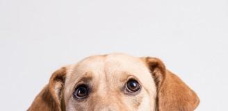 Hundefotografie Studioportrait Mischling