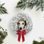 Ein Whippet sieht durch einen Weihnachtskranz auf weissem Hintergrund umringt von Tannenbäumen beim Hunde Vintage Weihnachts Fotoshooting von Tierlicht