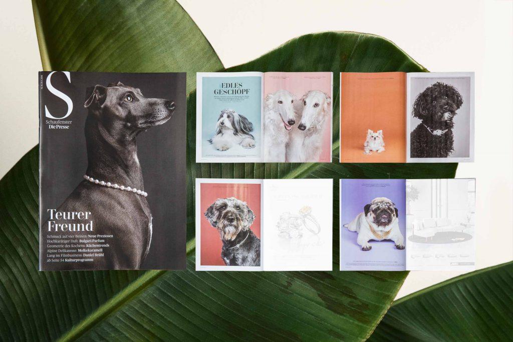 """Hundeportrait auf Magazinseiten in """"DiePresse-Schaufenster"""""""
