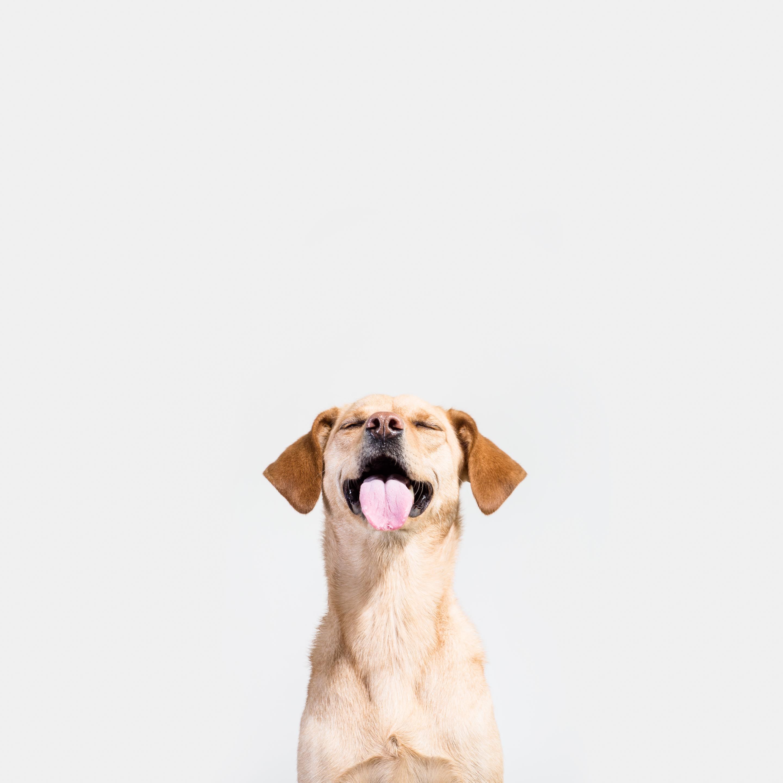 Hundefotografie-Tierlicht-Studioportraits-2