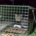 Streunerkatzen Falle mit gefangener Katze bei Nacht