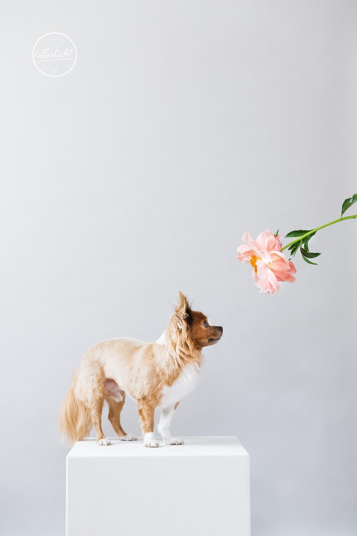 Tierlicht_Im Blütenreigen