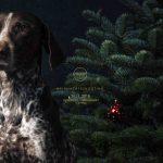 Hundefotografie mit Christbaum in Weihnachtlicher Stimmung