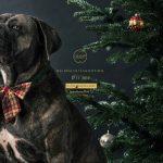 Weihnachtsfotoshooting für Hunde in der Hundegreisslerei