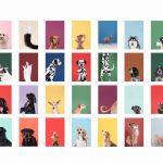 Bunte Hunde Portraits unterschiedlichster Hunderassen