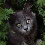 Katzenfotografie einer grauen Katze im Garten zwischen Pflanzen