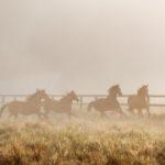 Pferde fotografieren auf einer nebeligen Koppel mit Pferdefotograf Tierlicht im Sommer