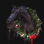 Pferde Weihnachtsfotos von Pferdefotograf Tierlicht zeigen einen Rappen mit Weihnachtskranz beim Weihnachts Fotoshooting in Niederösterreich